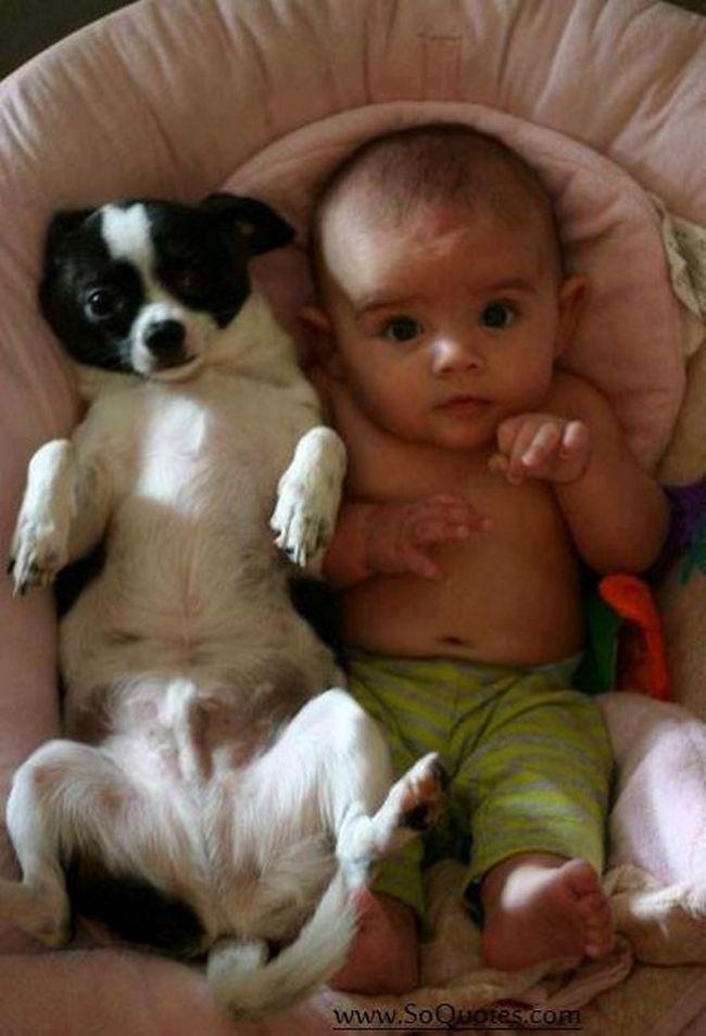 Crianças e animais de estimação (9)