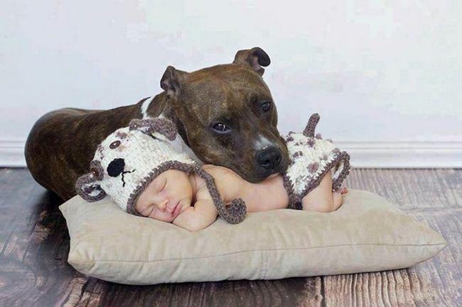 Crianças e animais de estimação (8)