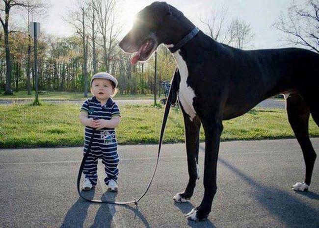 Crianças e animais de estimação (6)