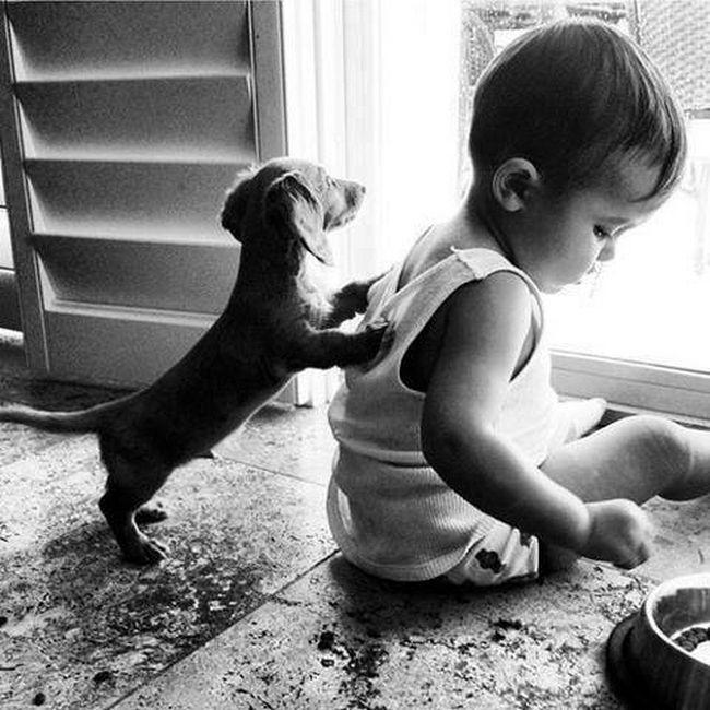 Crianças e animais de estimação (4)