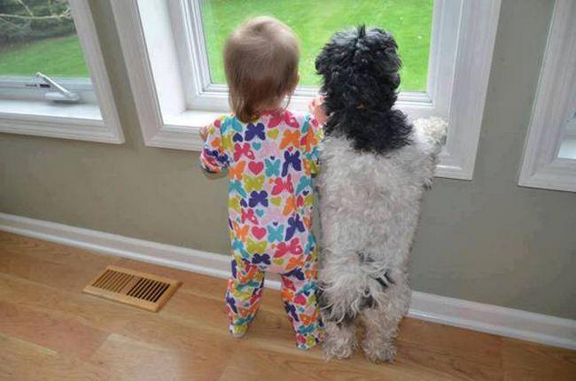 Crianças e animais de estimação (20)