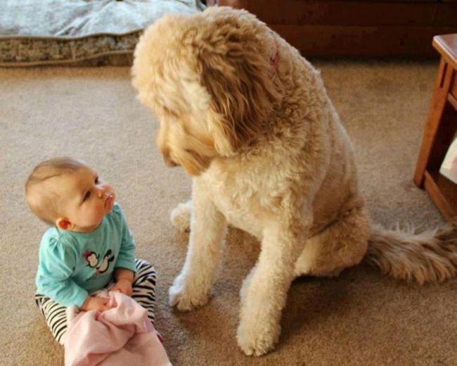 Crianças e animais de estimação (2)