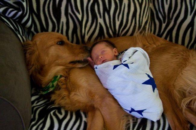 Crianças e animais de estimação (1)