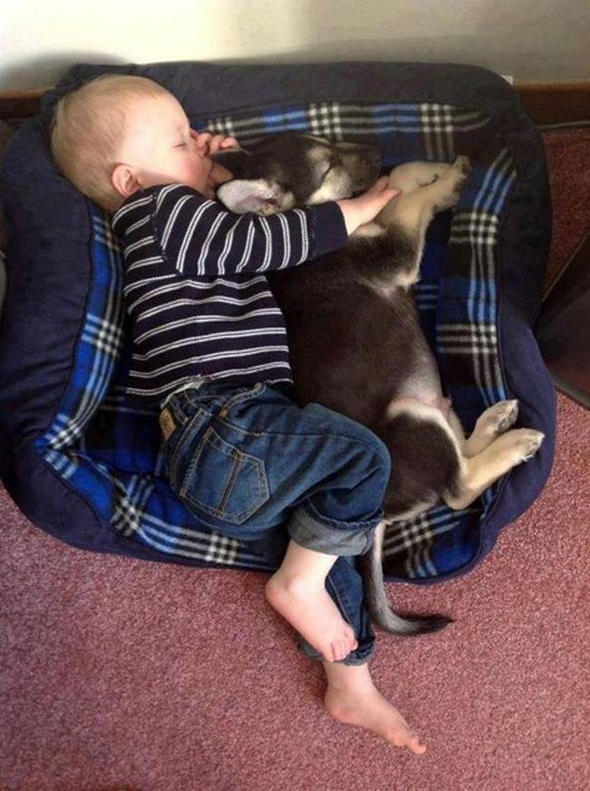 Crianças e animais de estimação (19)