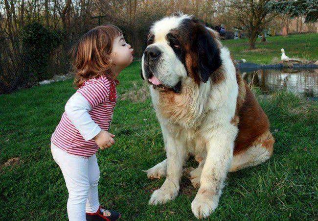 Crianças e animais de estimação (14)