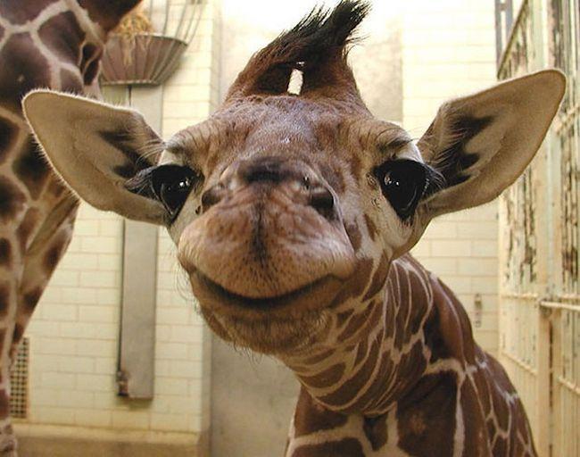 Animais mais felizes do mundo (11)