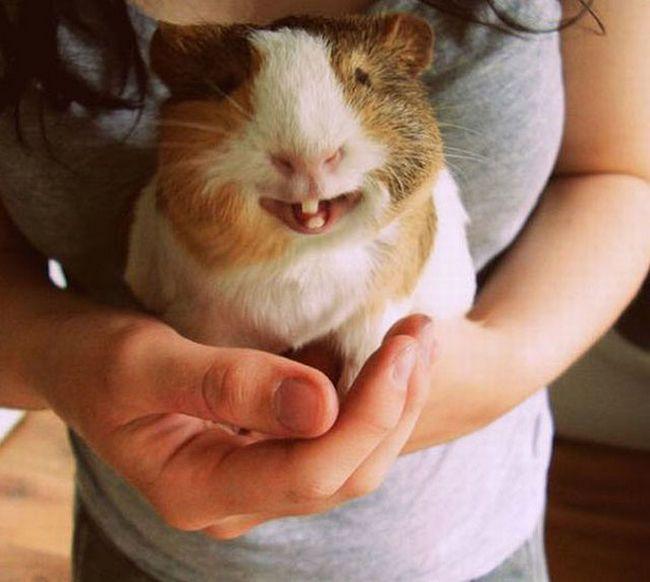 Animais mais felizes do mundo (12)