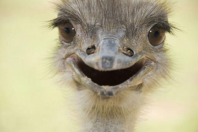 Animais mais felizes do mundo (14)