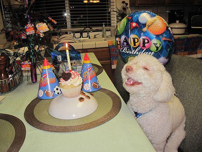 Animais mais felizes do mundo (17)