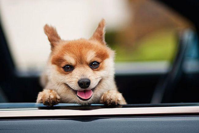 Animais mais felizes do mundo (19)