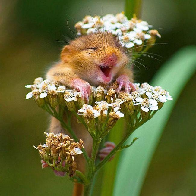 Animais mais felizes do mundo (27)