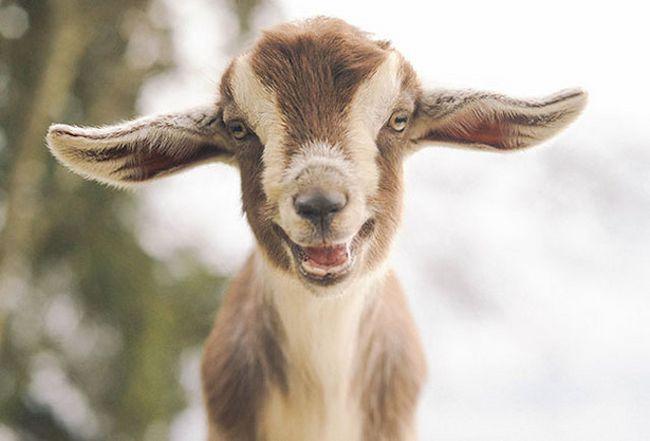 Animais mais felizes do mundo (4)
