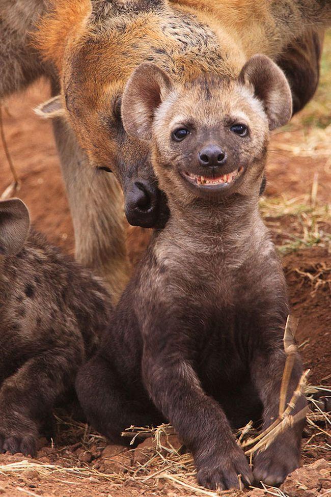 Animais mais felizes do mundo (9)