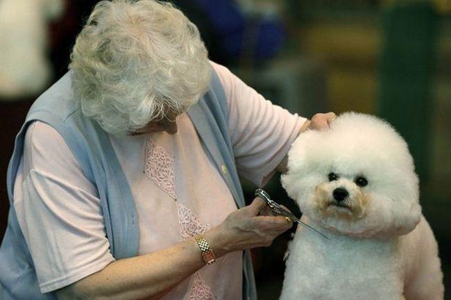Cachorros e seus donos (1)