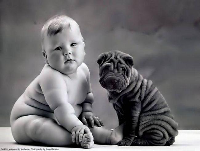 Cachorros e seus donos (4)