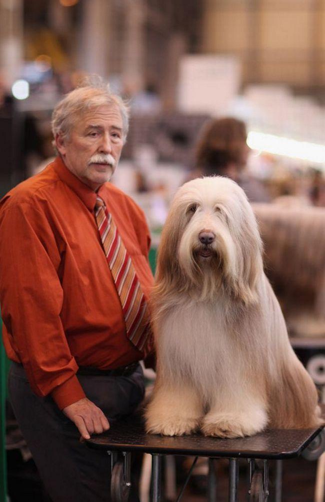 Cachorros e seus donos (12)