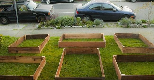 """pequena horta no jardim : pequena horta no jardim:Dia 1: """"O que meu vizinho está aprontando no quintal?"""" Dia 60"""
