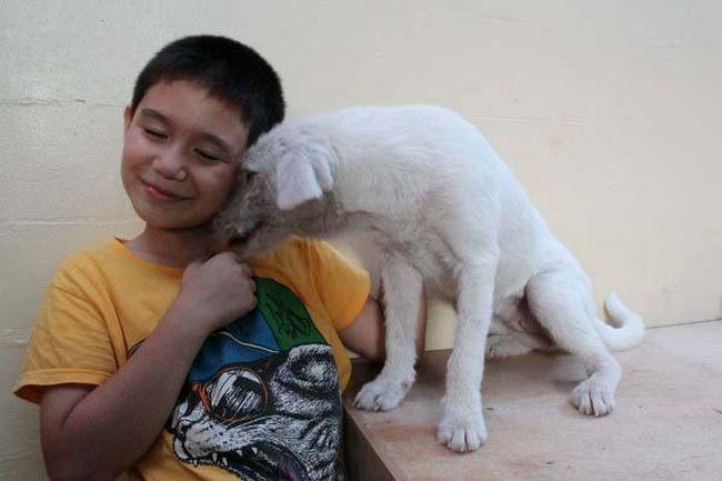 Abrigo de animais (10)