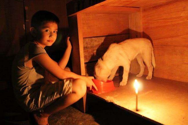 Abrigo de animais (15)