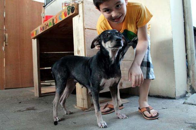 Abrigo de animais (7)