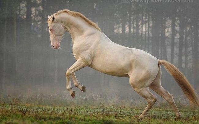 Cavalos formidáveis (1)