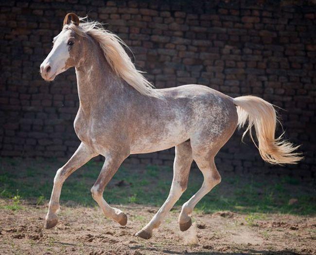 Cavalos formidáveis (10)