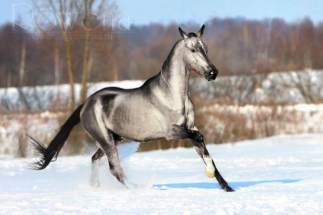 Cavalos formidáveis (11)