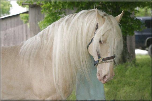 Cavalos formidáveis (15)