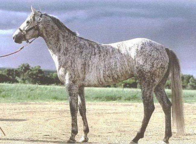 Cavalos formidáveis (17)