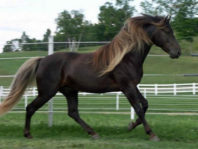 Cavalos formidáveis (18)