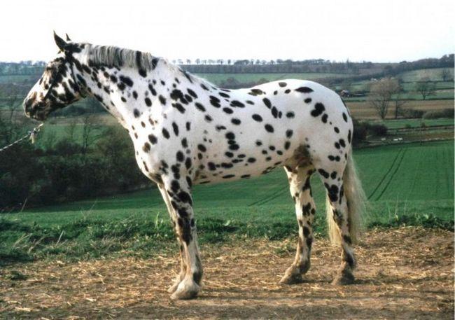Cavalos formidáveis (19)