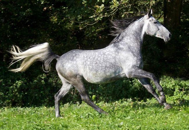 Cavalos formidáveis (2)