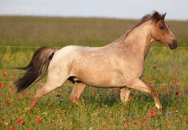 Cavalos formidáveis (21)