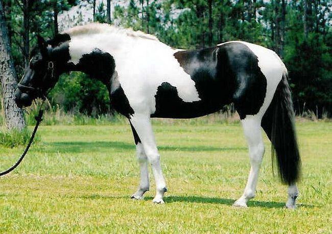 Cavalos formidáveis (3)
