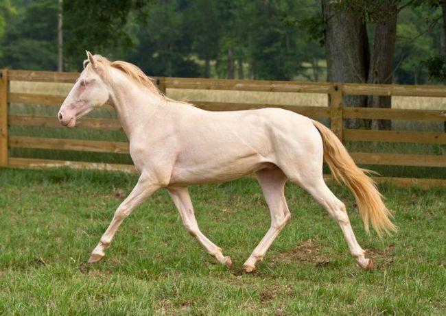 Cavalos formidáveis (4)
