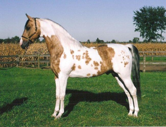 Cavalos formidáveis (6)