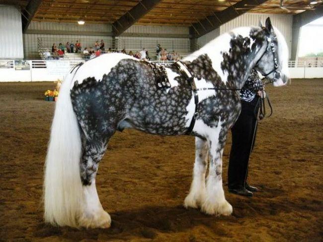 Cavalos formidáveis (7)