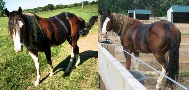 Cavalos formidáveis (8)
