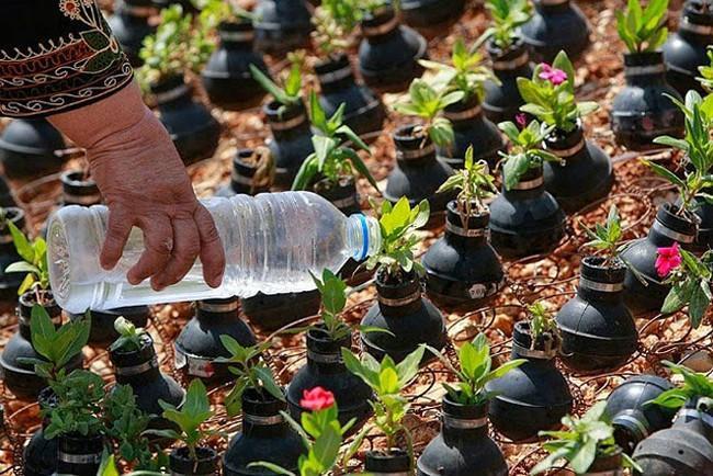 Jardim de granadas (3)