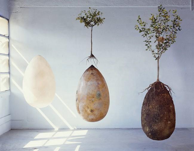 Addio bare! La capsula organica trasforma le persone morte in alberi