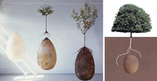 Adeus caixões! Cápsula orgânica transforma pessoas falecidas em árvores