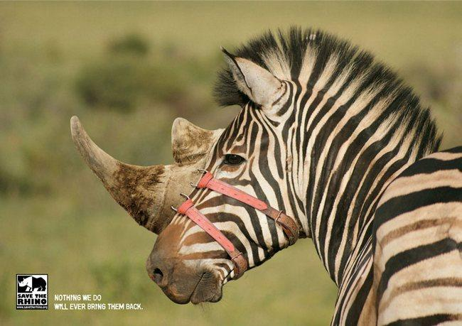 awebic-campanha-publicitaria-animais-14