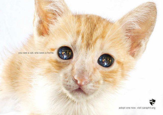 awebic-campanha-publicitaria-animais-31