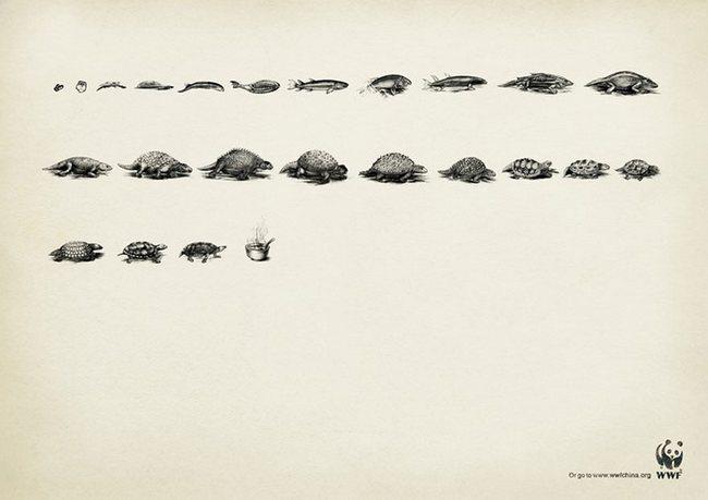 awebic-campanha-publicitaria-animais-32