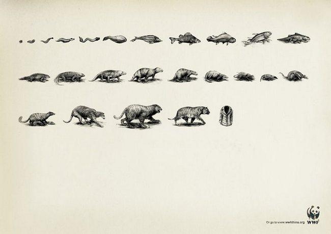 awebic-campanha-publicitaria-animais-33