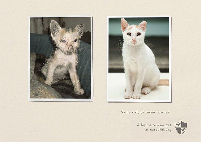 awebic-campanha-publicitaria-animais-37