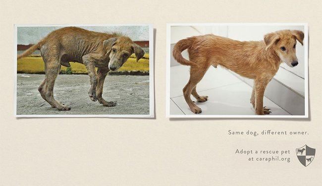 awebic-campanha-publicitaria-animais-38
