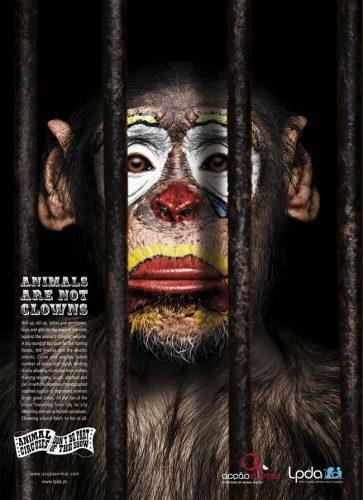 awebic-campanha-publicitaria-animais-4