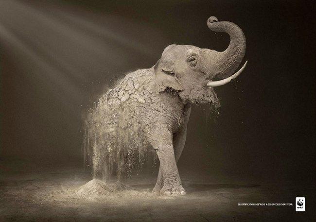 awebic-campanha-publicitaria-animais-40