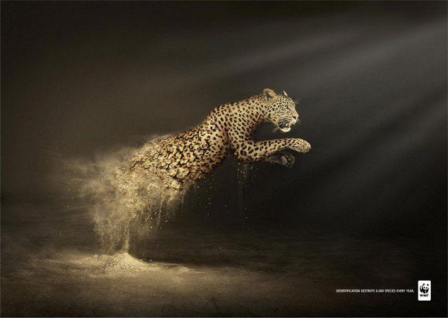 awebic-campanha-publicitaria-animais-41